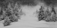 http://www.bernalespacio.com/files/gimgs/th-46_Hans Op de Beeck Snow and Pine Trees 2016.jpg